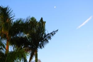 Doris-Day-worthy blue skies.